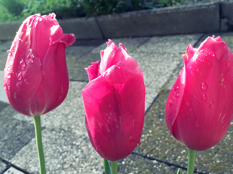 pelamarela, blogger, favorites, flowers